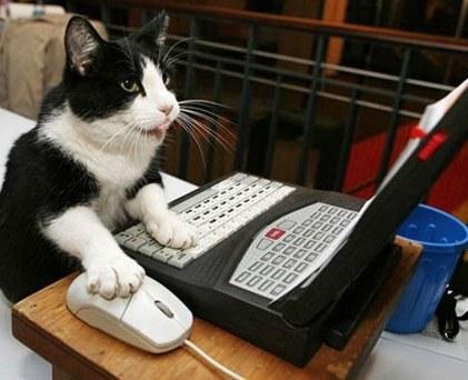 Vsak ima lahko svojo spletno trgovino!