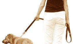 Poslovna priložnost: sprehajalec psov