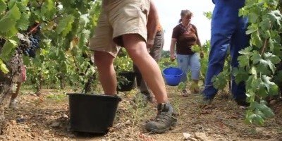 Kdo lahko okuša in skrbi za vino bolje kot vinski okuševalci?