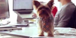 Zakaj ne bi z vami v službo hodil tudi vaš pes?