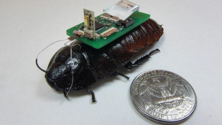 Biorobotični hroščki z uporabo vgrajenih mikrofonov v misijo iskanja preživelih