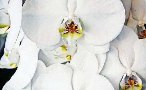 Primer nedenarnega trgovanja: cvetličarna
