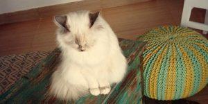 """V Ljubljani je zaživel prvi """"mačji"""" lokal: Cat Caffe"""