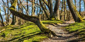 Razpis: spodbujanje razvoja podjetij na področju rabe lesa