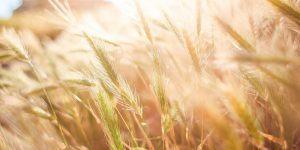 Podpora za naložbe v kmetijska gospodarstva za leto 2017