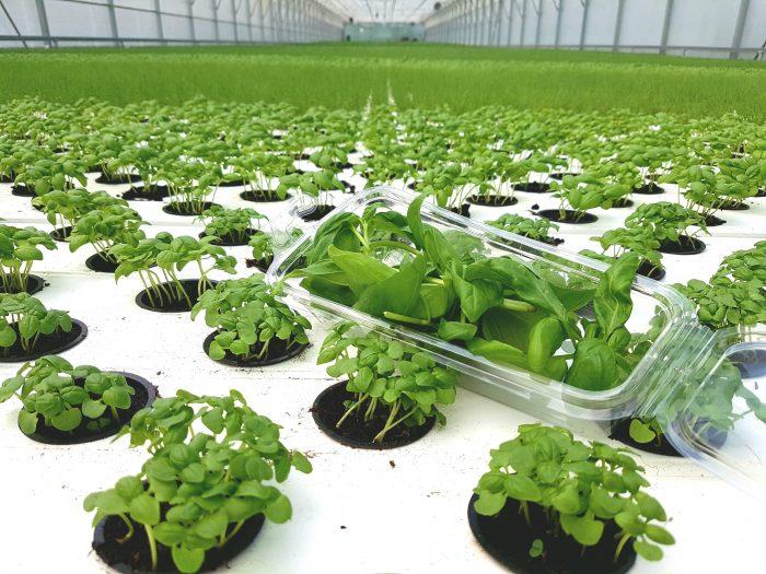 Panorganic rastlinjak