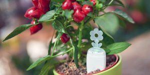 PlantRay je prava rešitev za pozabljivce zalivanja rož