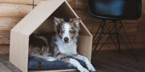 UtaUta – unikatno pohištvo za hišne ljubljenčke