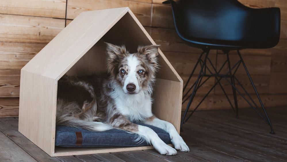Unikatno pohištvo za hišne ljubljenčke UtaUta (Vir: UtaUta)