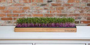 Nov slovenski projekt na Kickstarterju – Spoznajte Evolve Garden